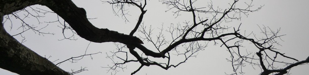 cropped-branches.jpg